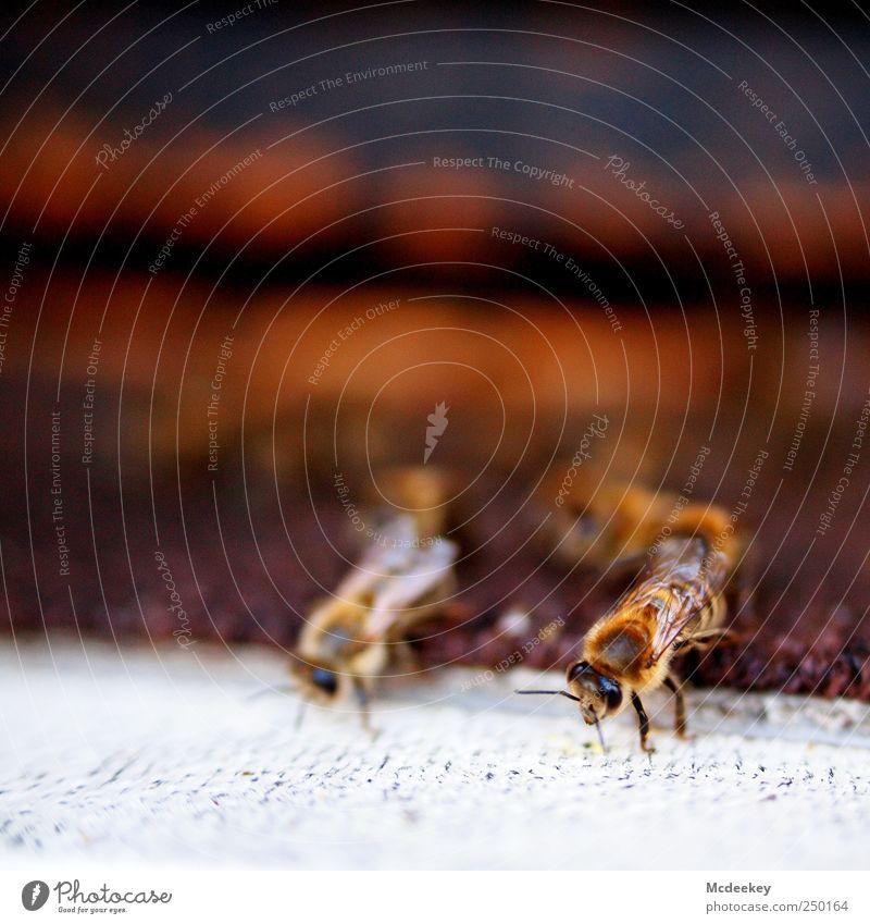 other colonies 3 weiß Tier schwarz Auge gelb grau Beine orange braun gold fliegen natürlich Wildtier authentisch Flügel