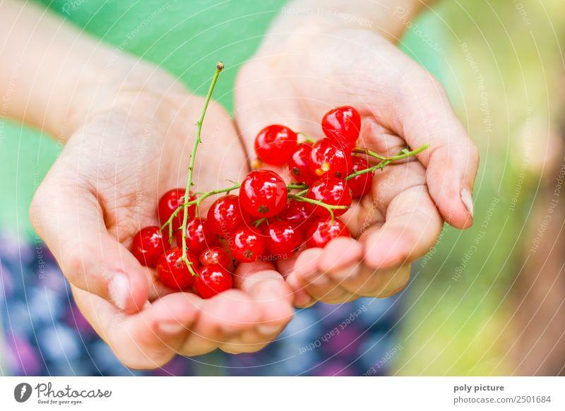 Kinderhand hällt frische Johannisbeeren Natur Jugendliche Sommer Pflanze Landschaft Hand Erholung Freude Mädchen Leben Umwelt Frühling Wiese Junge Garten