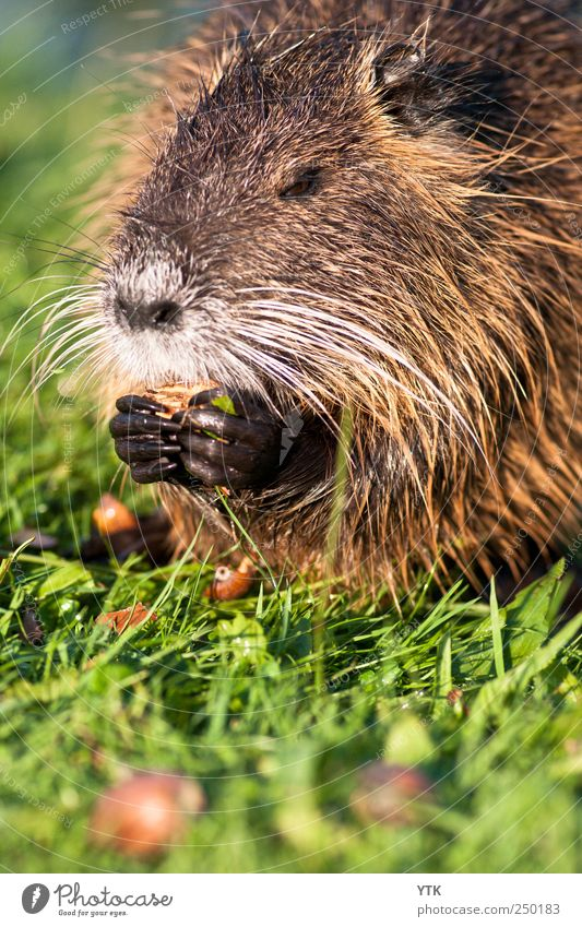 Njamm njamm jamm Natur grün Sommer Pflanze Tier Umwelt Wiese Gras Park Wildtier Ernährung Schönes Wetter niedlich Zähne berühren Fell