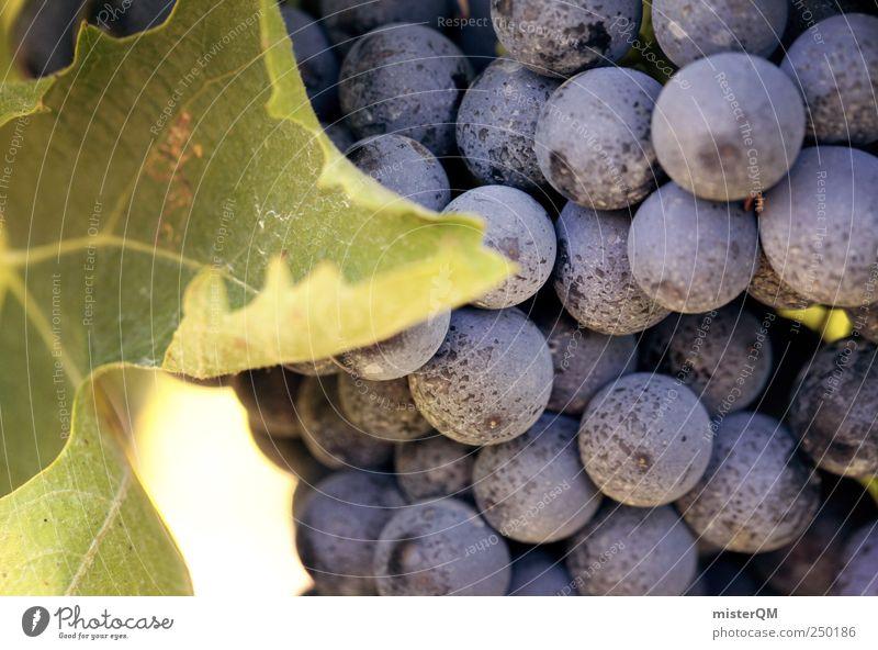 Bravo Traube. Lebensmittel Frucht Ernährung Picknick Bioprodukte Sekt Prosecco frisch violett Weintrauben Weinlese Ernte Natur Weinberg Rotwein Rosinen Saft