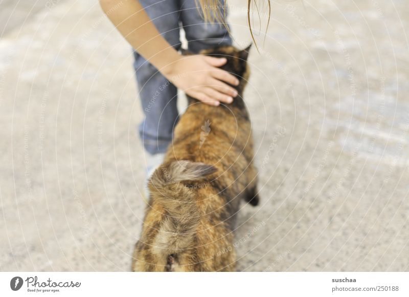katzenklo bzw katzenpo .. Mensch Kind Hand Mädchen Tier Beine Katze braun Arme Kindheit berühren Fell Haustier Schwanz 3-8 Jahre Tierliebe