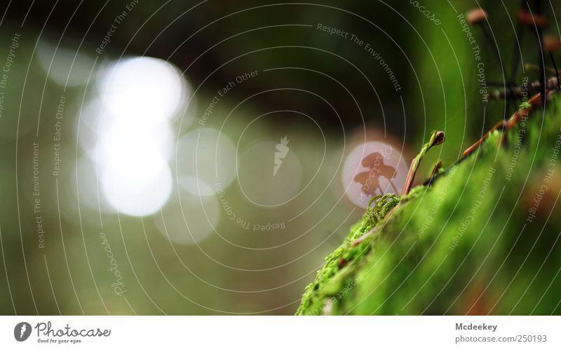illusion Umwelt Natur Landschaft Pflanze Moos natürlich braun mehrfarbig grau grün schwarz weiß Pilz Täuschung Kreis Nadelbaum Tannennadel gruppieren mehrere