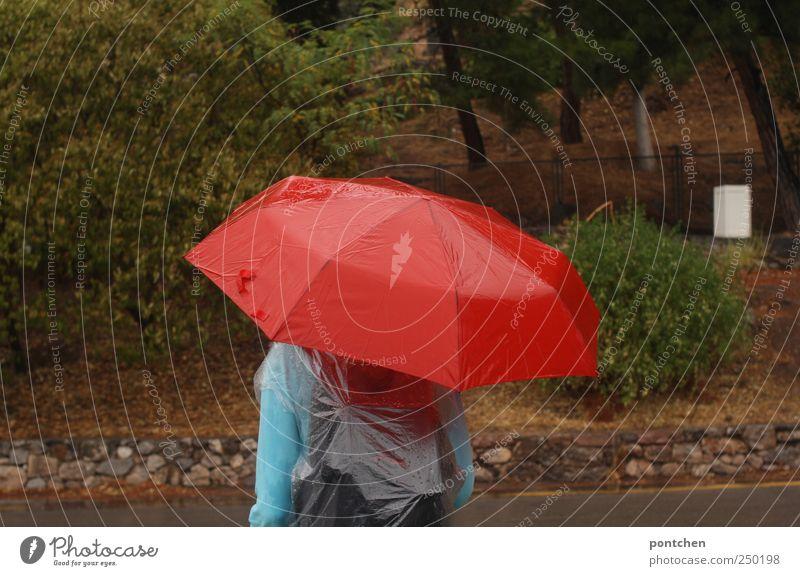nass Mensch Natur Baum rot Wege & Pfade Regen Rücken maskulin Bekleidung Regenschirm frieren Tourist Regenjacke Schutzbekleidung