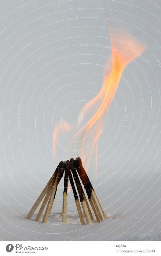 züngeln Holz Brand Feuer stehen Team Vergänglichkeit heiß Beratung Menschenmenge brennen Gesellschaft (Soziologie) Zusammenhalt Teamwork Flamme Streichholz