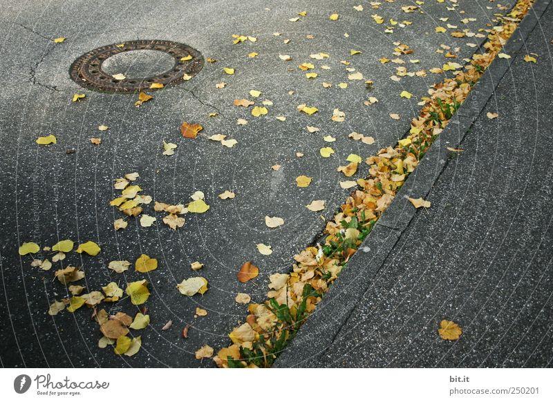399 Tage... Blatt Umwelt gelb dunkel Straße kalt Herbst Wege & Pfade grau Linie Stimmung liegen gold Klima leuchten rund