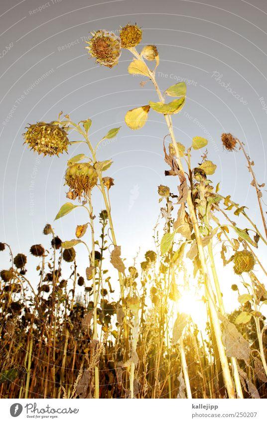 sommerschlussverkauf Natur Pflanze Sommer Blume Blatt Tier Herbst Garten Blüte Arbeit & Erwerbstätigkeit Feld Wachstum Klima Lifestyle Sonnenenergie
