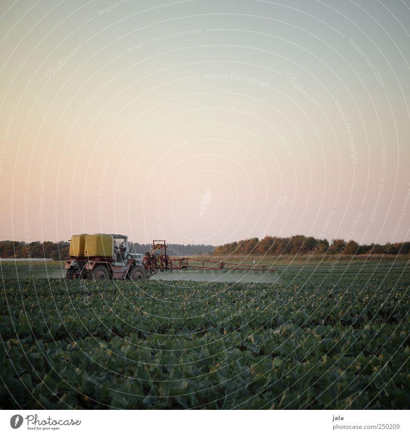 landwirtschaft Landwirtschaft Forstwirtschaft Umwelt Natur Landschaft Pflanze Himmel Herbst Grünpflanze Nutzpflanze Feld Traktor Arbeit & Erwerbstätigkeit