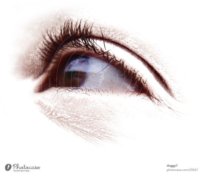 Der Augenschein Frau weiß Auge hell Perspektive Wimpern Pupille