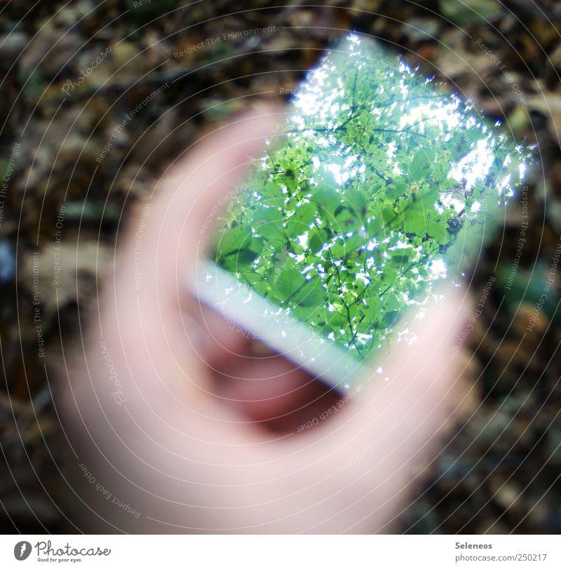 Laubdach Natur Hand Baum Pflanze Sommer Blatt Wald Umwelt Park Finger Perspektive Spiegel Umweltschutz Reflexion & Spiegelung