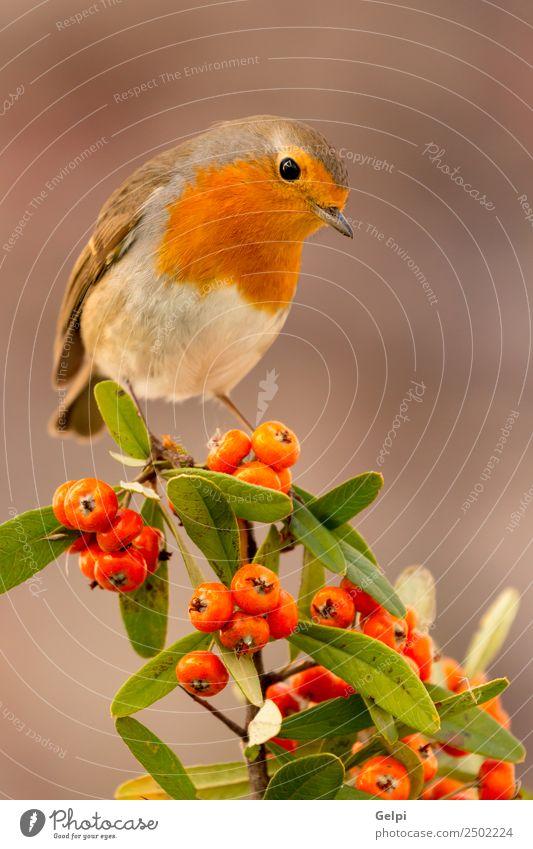 Natur Mann schön weiß Tier Erwachsene Leben Umwelt Herbst natürlich klein Vogel braun wild Europa Feder