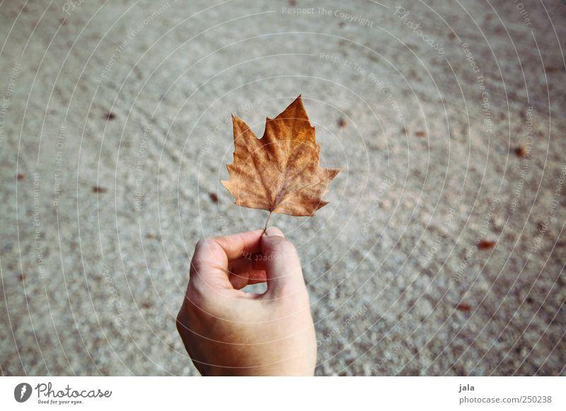 herbstblatt Natur Hand Blatt Herbst grau gold natürlich zeigen haltend