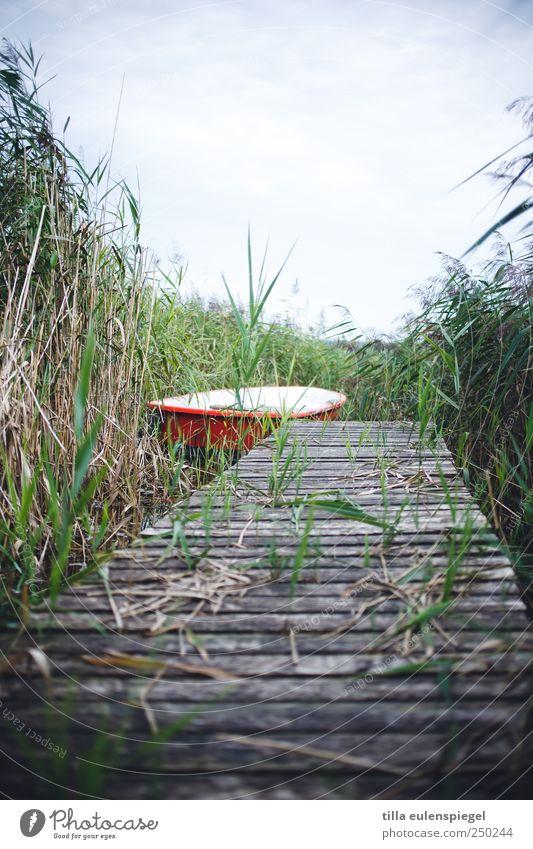 - Freizeit & Hobby Ausflug Sommer Natur Sträucher Seeufer Ruderboot grün rot weiß Steg Schilfrohr bewachsen Farbfoto Außenaufnahme Menschenleer