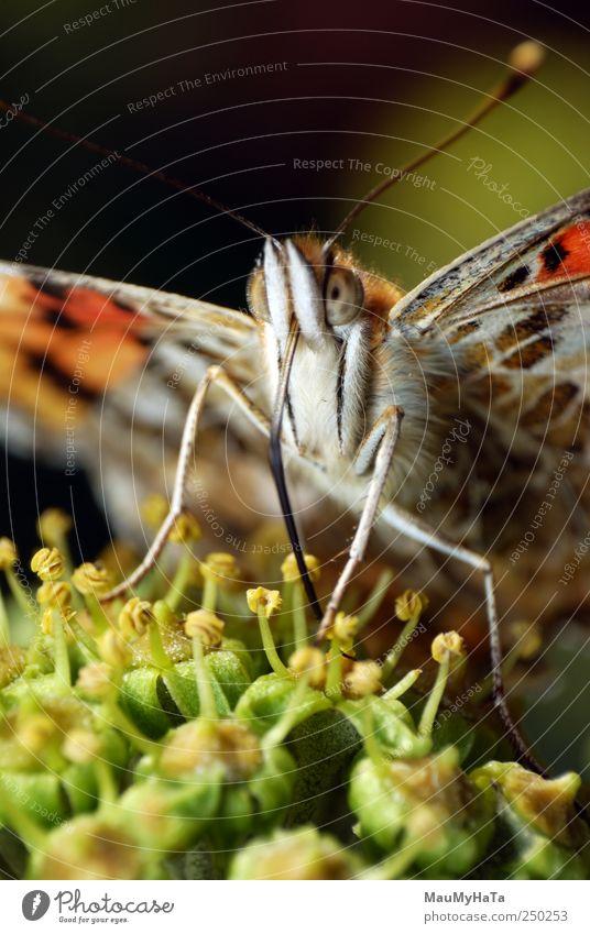 Natur Pflanze Blume Tier Erholung Gefühle Garten Blüte Park Kunst elegant Fröhlichkeit Klima Wildtier Macht Romantik