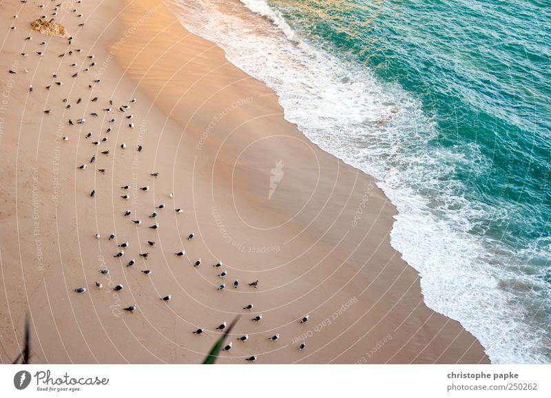 Die Strandwächter Sommer Ferien & Urlaub & Reisen Meer Umwelt Wellen Vogel warten sitzen Pause Möwe Sommerurlaub Gischt Schwarm bewachen