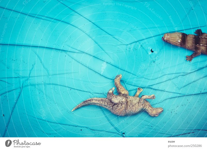 Poolbillard Wasser blau Freude Sommer Tier Linie lustig warten nass liegen gefährlich Bodenbelag Schwimmbad beobachten Kunststoff Spielzeug