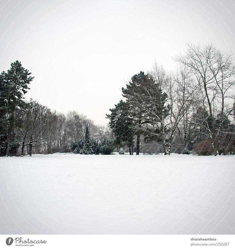 ...und die Tage werden wieder kürzer! Himmel Natur weiß Baum Einsamkeit Landschaft Winter schwarz Wiese Wege & Pfade Schnee grau Freiheit Horizont Park