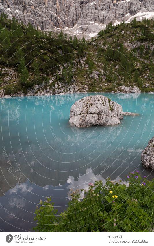 Gletscherwasser Ferien & Urlaub & Reisen Sommerurlaub Berge u. Gebirge Natur Landschaft Frühling Blume Felsen Alpen Dolomiten Seeufer Italien türkis Abenteuer