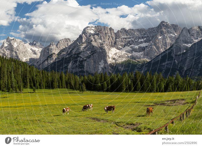 Lebensglück Ferien & Urlaub & Reisen Ausflug Sommerurlaub Berge u. Gebirge Natur Landschaft Wolken Frühling Wiese Wald Felsen Alpen Dolomiten Gipfel Kuh 4 Tier
