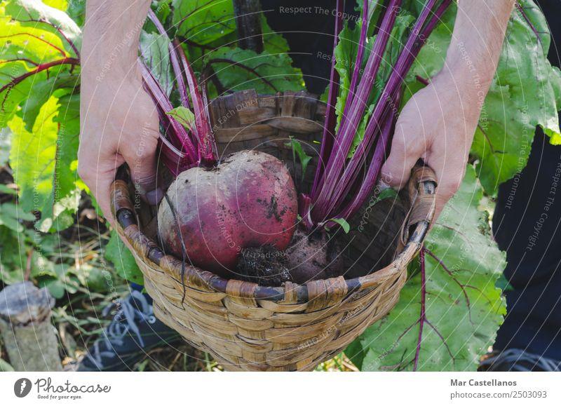 Mensch Natur Mann Sommer Pflanze grün Hand rot Blatt Erwachsene natürlich Ernährung Erde frisch Boden Küche
