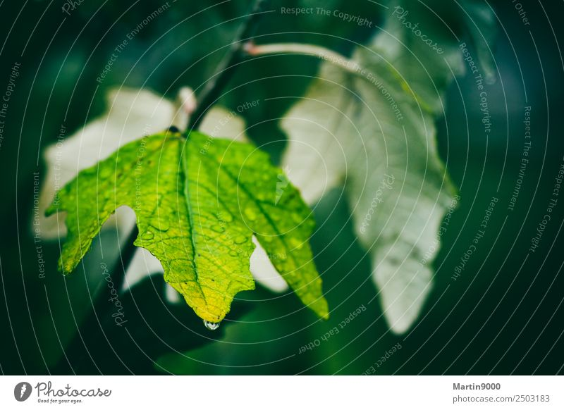 Besinnlichkeit Natur Tier Herbst Regen Blatt Grünpflanze Mitgefühl trösten Trauer Tod Traurigkeit Farbfoto Gedeckte Farben Außenaufnahme Textfreiraum rechts