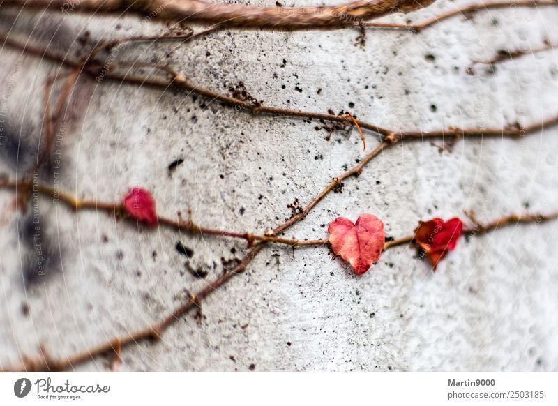 Liebe - Leben - Tod - Erinnerung Glück Natur Pflanze Efeu Blatt Zeichen Herz Netzwerk Gefühle Verliebtheit Mitgefühl trösten Trauer Inspiration Traurigkeit