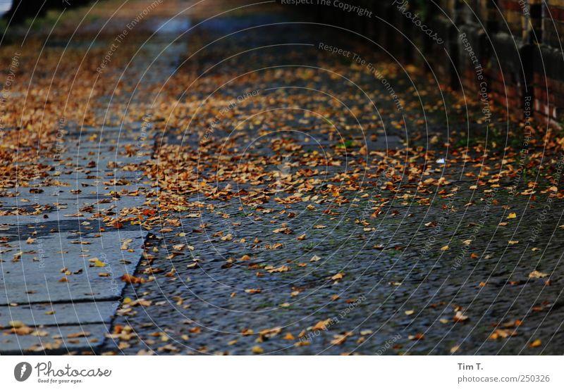 Herbst auch in Berlin Wege & Pfade Trauer Stadtzentrum Altstadt