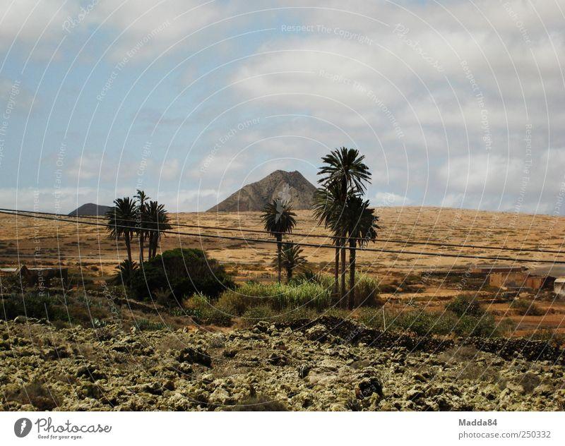 einsamer Berg Himmel Natur Baum Pflanze Sommer Ferien & Urlaub & Reisen Wolken Einsamkeit Ferne Umwelt Landschaft Berge u. Gebirge Feld Erde frei Insel