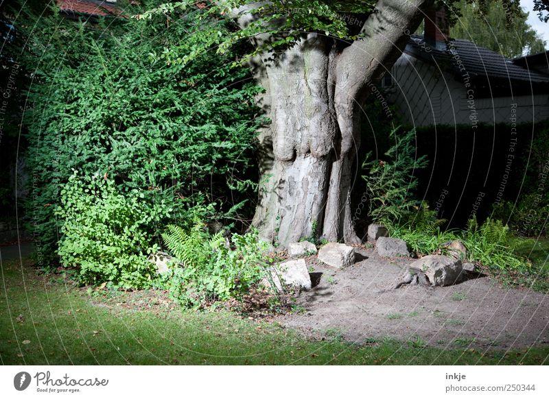 es geschah am hellichten Tag Natur Pflanze Erde Baum Sträucher Buche Baumstamm Garten Park Stein Haus alt außergewöhnlich bedrohlich dick dunkel gruselig