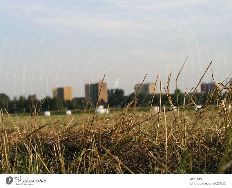 Wiese Gras Hochhaus Halm Landwirtschaft Weizen Stroh Hafer Strohballen