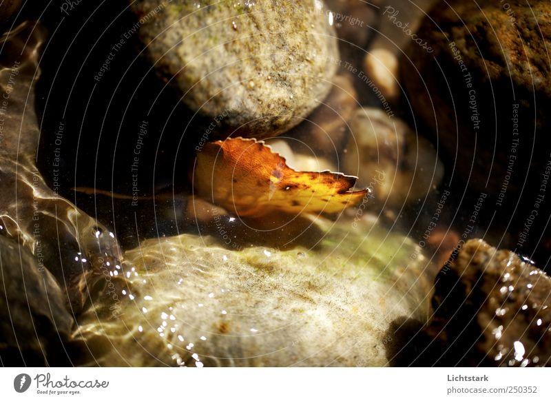 solange ich bin, hoffe ich Natur Pflanze Wasser Einsamkeit Blatt Umwelt Stein Wellen Hoffnung Glaube Flussufer Bach Vorsicht Willensstärke Ausdauer Tapferkeit