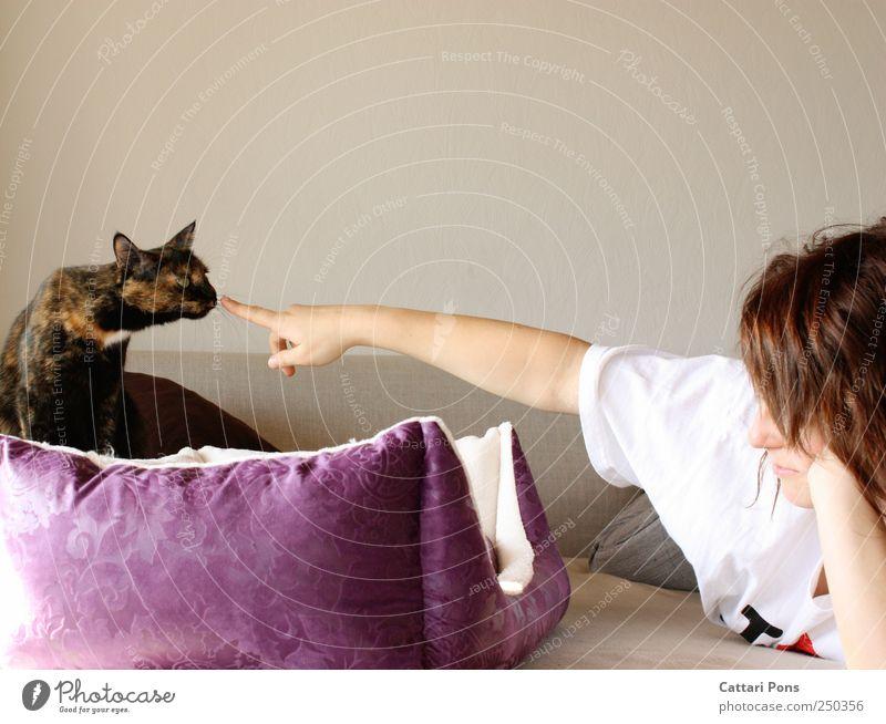 anstupsen Katze Mensch Frau Jugendliche schön Tier Erwachsene hell Zusammensein Häusliches Leben Fell violett dünn Junge Frau berühren Sofa