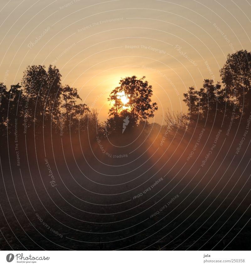 morgens Umwelt Natur Landschaft Pflanze Himmel Sonnenaufgang Sonnenuntergang Sonnenlicht Herbst Nebel Baum Sträucher Feld natürlich Farbfoto Außenaufnahme