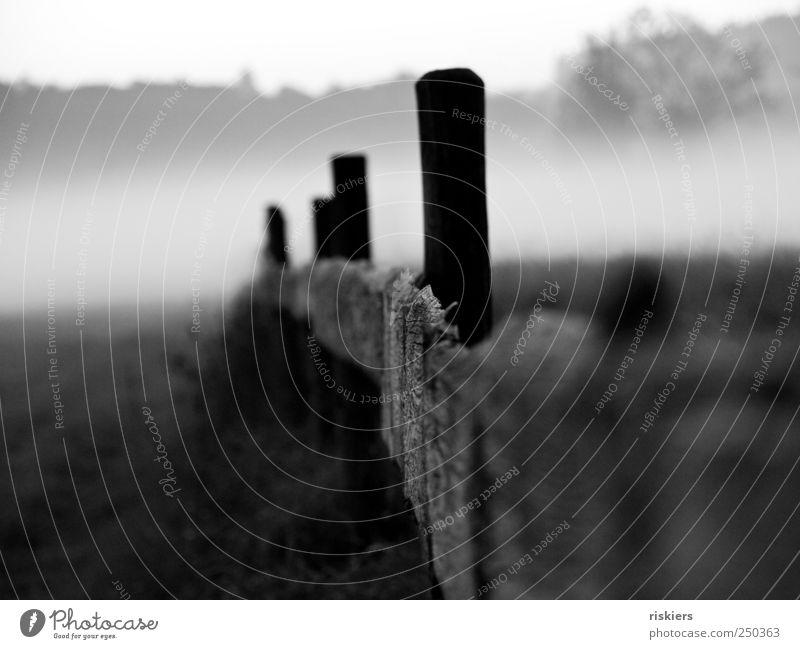 Nebel Natur ruhig Herbst Umwelt Landschaft Feld Nebel