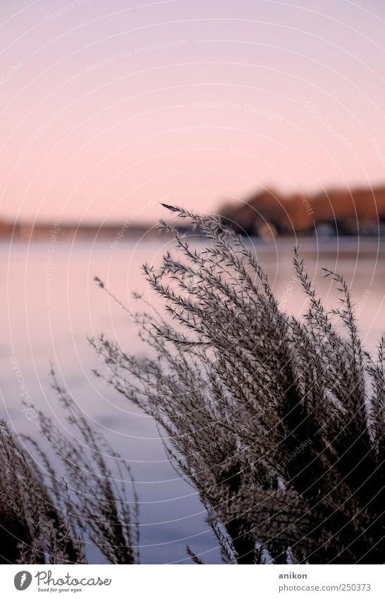 kleiner Wintergruß Natur Landschaft Wasser Himmel Eis Frost Pflanze Sträucher Park Wiese Küste Seeufer beobachten Denken Erholung genießen träumen frei kalt nah
