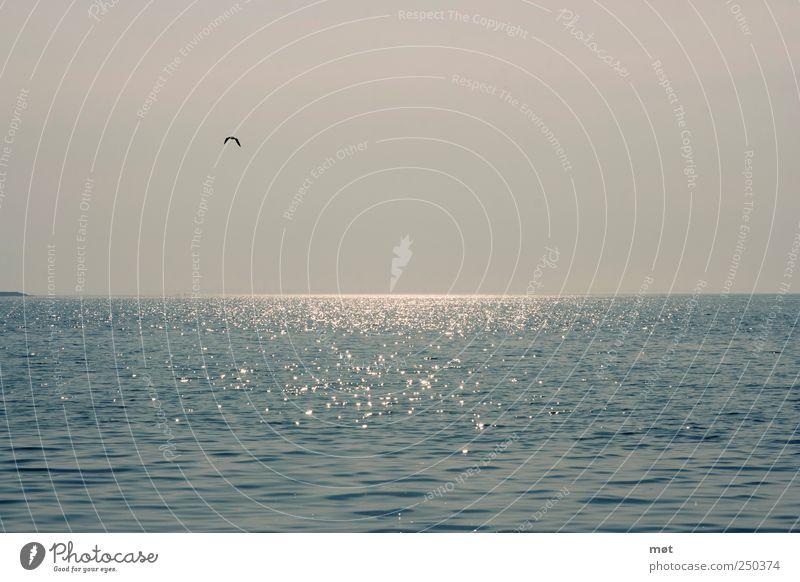 Ich will Meer Natur Landschaft Wasser Wolkenloser Himmel Ostsee Gelassenheit ruhig Reflexion & Spiegelung Vogel Farbfoto Außenaufnahme Menschenleer