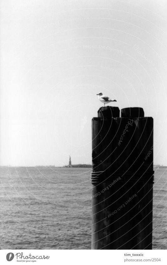 new_york.00 Himmel Wasser Ferne Küste Vogel USA Aussicht Anlegestelle Taube New York City Manhattan Atlantik Poller New York State Vor hellem Hintergrund