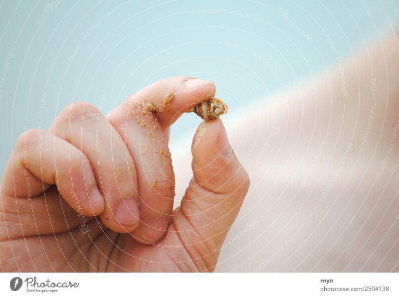 Einsiedler Ferien & Urlaub & Reisen Sommer Sommerurlaub Strand Meer Insel maskulin Hand Finger Natur Tier Sand Wasser Schönes Wetter Küste Nordsee Ostsee