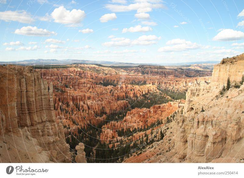 Bryce Canyon View Ferien & Urlaub & Reisen Tourismus Ausflug Himmel Horizont Schönes Wetter Baum Wald Felsen Berge u. Gebirge Schlucht Bryce Amphitheater