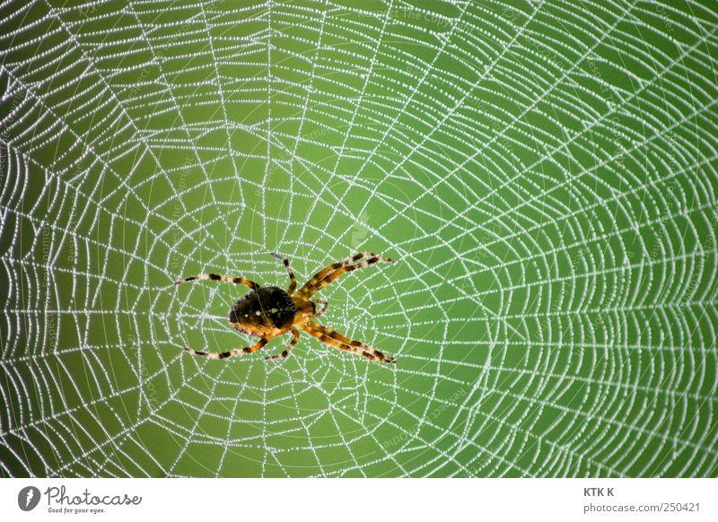 Damit ich Dich besser ... Natur grün weiß Tier gelb Eis Angst warten ästhetisch gefährlich Frost Baustelle Netz hängen Ekel Spinne