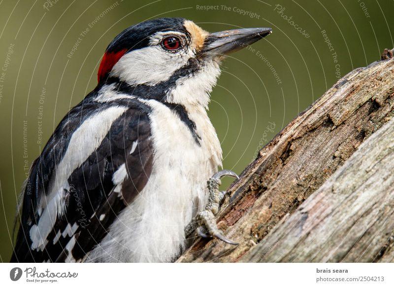 Natur Tier Wald Umwelt Holz Erde Vogel wild Wildtier Europa Flügel Spanien Wissenschaften Europäer Ornithologie Tierliebe