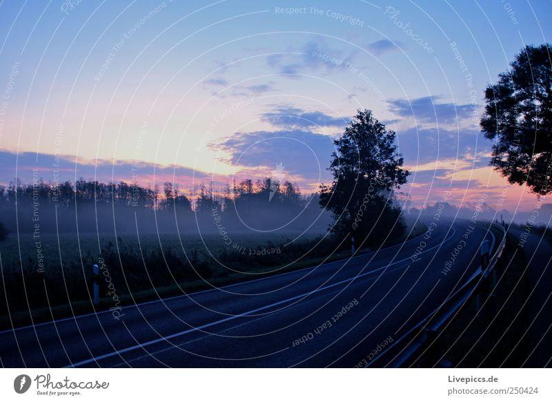 in to the light Himmel Natur Pflanze Wolken Herbst Umwelt Landschaft Nebel Erwartung Nebelbank