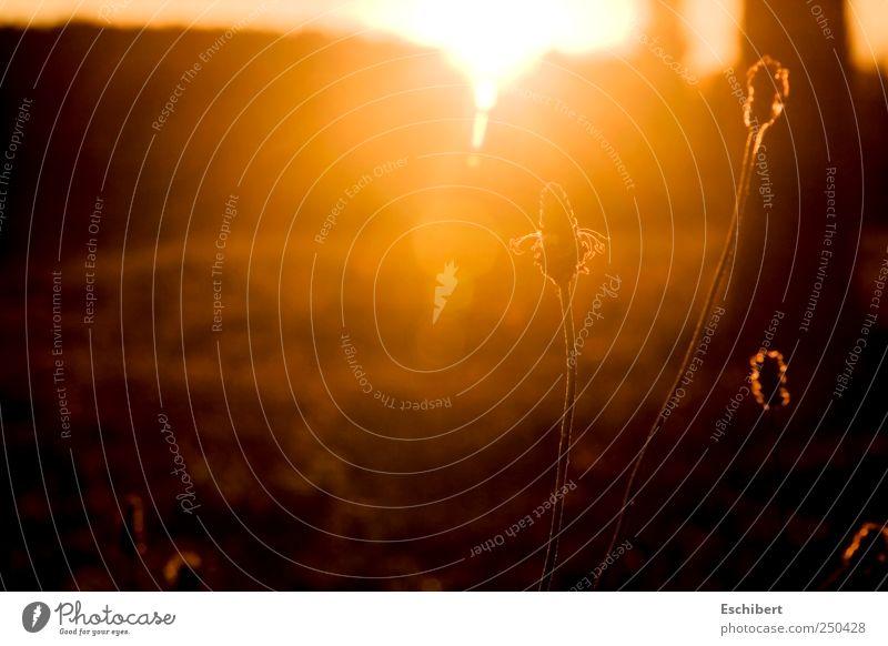Lichtschleier harmonisch Wohlgefühl Zufriedenheit Sinnesorgane Erholung ruhig Meditation Freiheit Sonne Natur Pflanze Sonnenaufgang Sonnenuntergang Sonnenlicht
