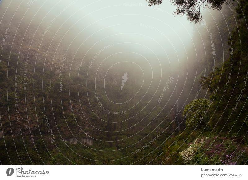 la fontaine Natur Landschaft Urelemente schlechtes Wetter Nebel Wald Berge u. Gebirge Schlucht ästhetisch außergewöhnlich dunkel gigantisch kalt natürlich schön