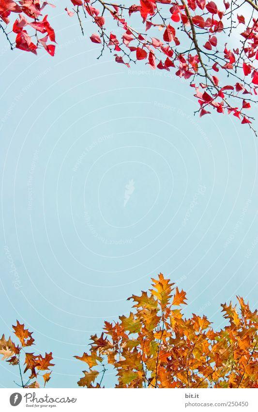 PREMIUM - BETTWÄSCHE KOLLEKTION 2011 Himmel Natur blau Pflanze Baum rot Blatt ruhig Umwelt Herbst Feste & Feiern Stimmung Horizont Dekoration & Verzierung gold
