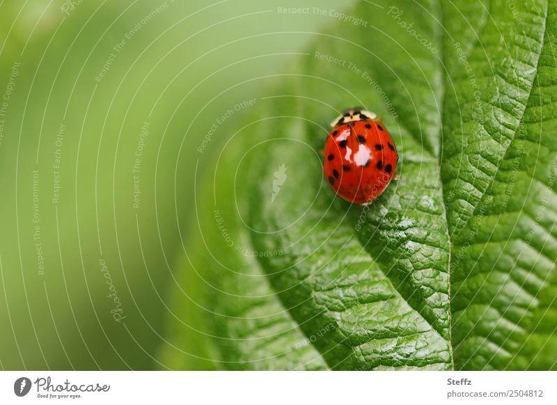 Punkte und Linien Natur Sommer Pflanze schön rot Tier Blatt Wald Garten grau Park Idylle Insekt Käfer krabbeln sommerlich