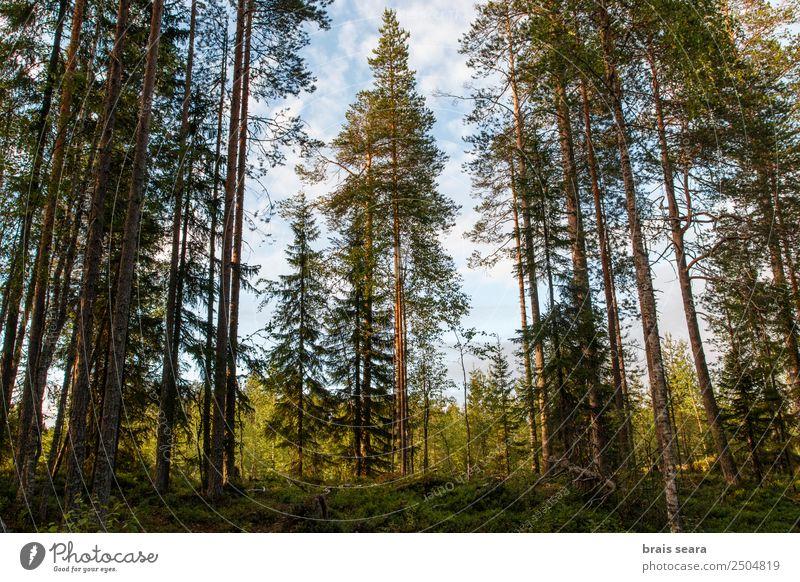 Himmel Natur Ferien & Urlaub & Reisen Sommer blau Pflanze schön Farbe grün Landschaft Baum Blatt Wald Berge u. Gebirge Umwelt Herbst