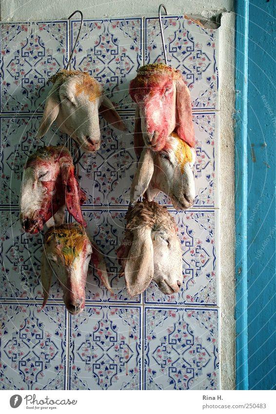 Das Schweigen der Lämmer ( nichts für sensible Menschen ) rot Tier Tod Kopf Lebensmittel authentisch Ernährung Tiergruppe Fliesen u. Kacheln gruselig hängen