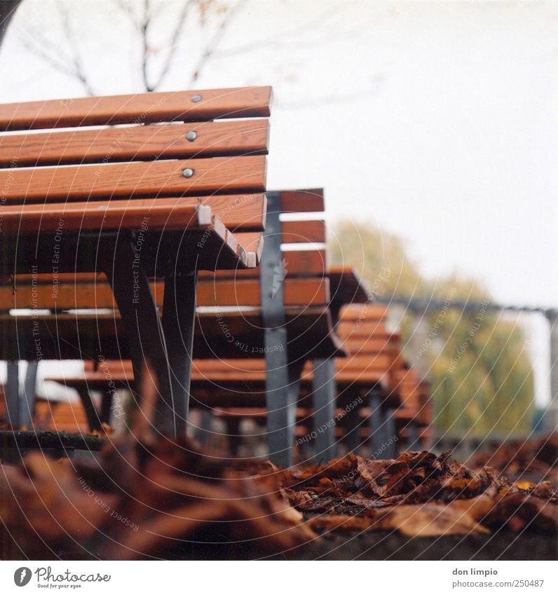 herbst Herbst Blatt Park kalt trist unten braun ruhig Parkbank analog Bank Außenaufnahme Mittelformat Scan Tag Schwache Tiefenschärfe Froschperspektive