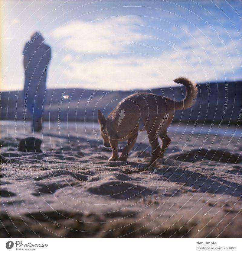 gassi gehen Sonnenlicht Sommer Strand Fuerteventura Tier Hund 1 Sand laufen Ferne hell Idylle Suche Spaziergang Gassi gehen Mittelformat analog chiwawa