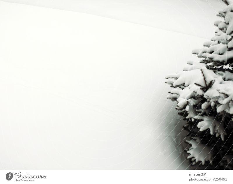 O Tanne. Natur weiß Baum Winter Schnee ästhetisch Weihnachtsbaum Vorfreude Schneelandschaft Nadelbaum Winterurlaub Schneedecke Weihnachtsdekoration Winterwald